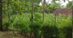 Tanah Dijual Murah di Sentolo Jalur ke Bandara NYIA | TANAH DIJUAL JOGJA
